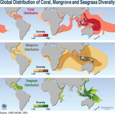 map of mangrove